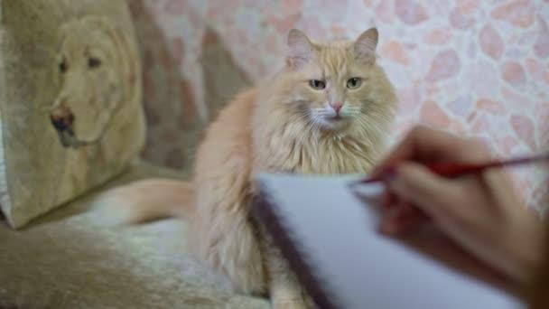 Rote Katze sitzt auf der Couch bei einer Psychologen-Sitzung.