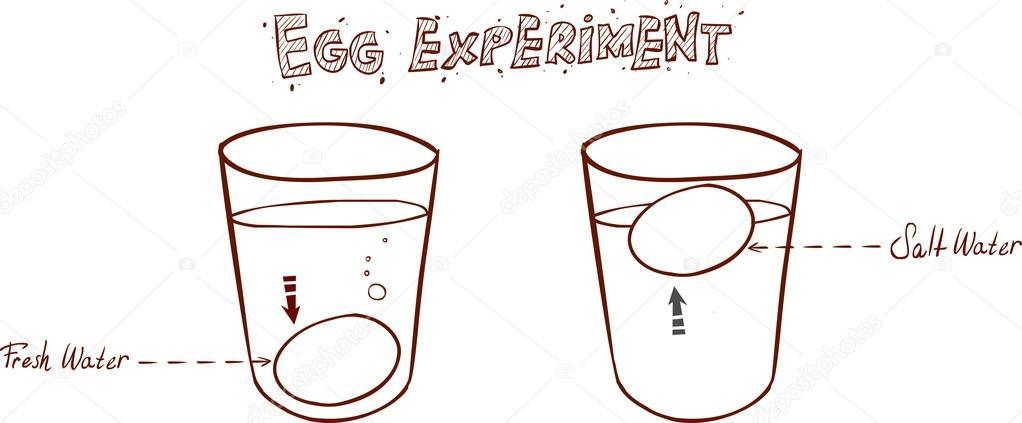 Egg Freshness Glass Of Water