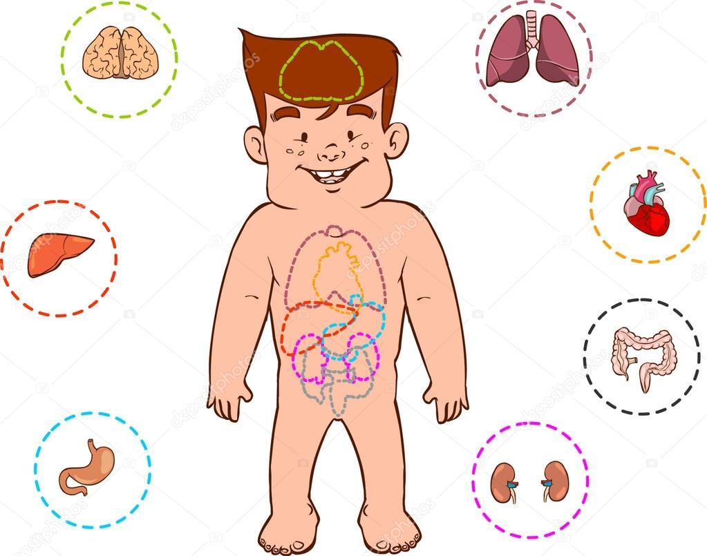aparato digestivo de los niños — Vector de stock © corbacserdar ...