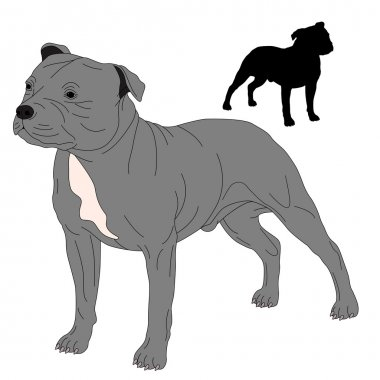 Staffordshire Bull Terrier dog silhouette drawing realistic