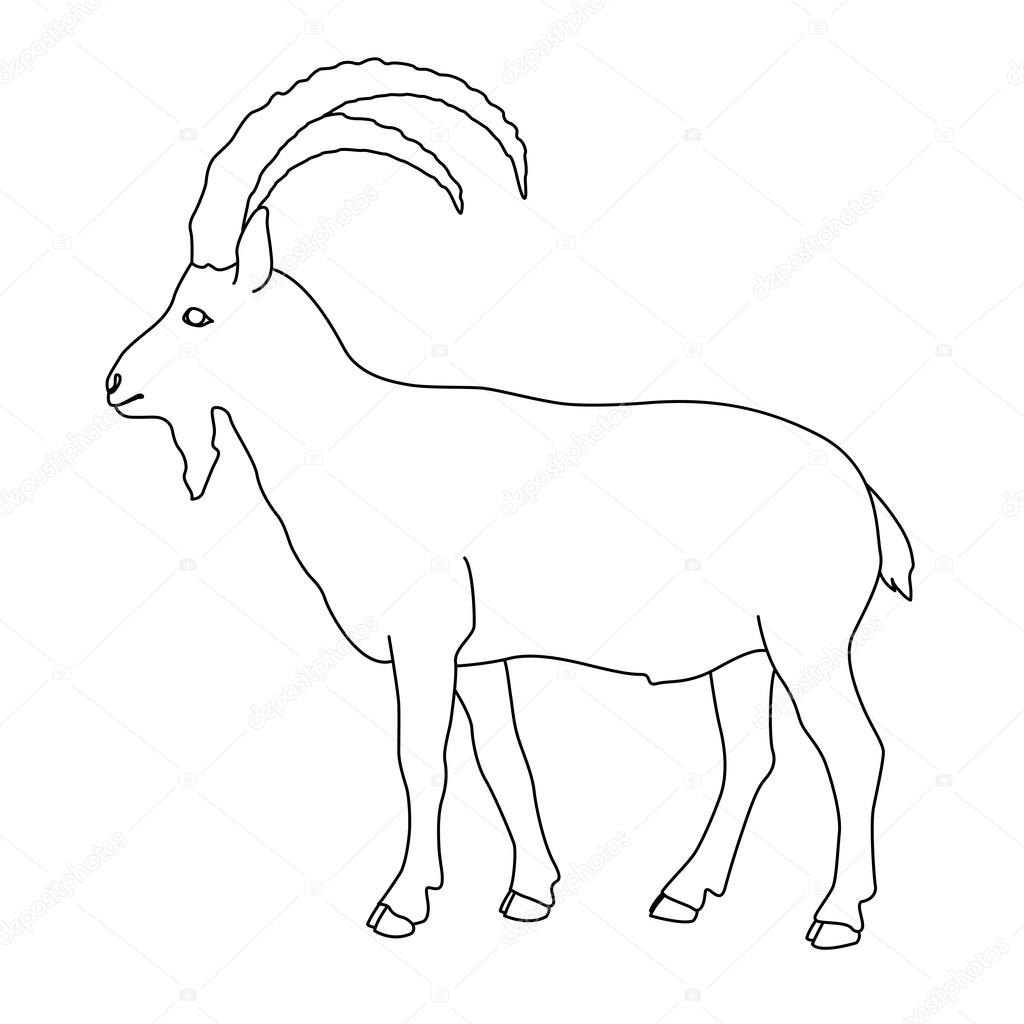 siberian mountain goat black line drawing � stock vector