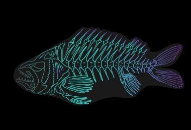 x-ray tetra cartoon fish.