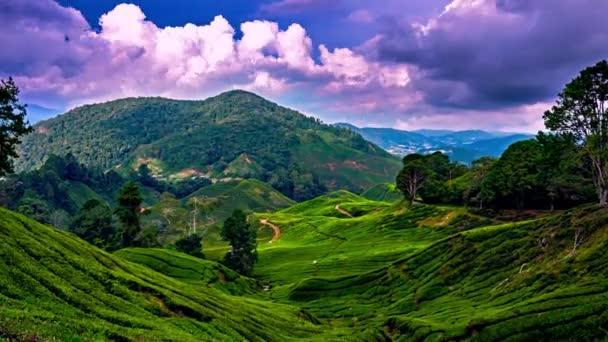 Nubi sopra le piantagioni di tè a Cameron Highlands