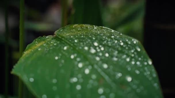 zár esőcseppek levél