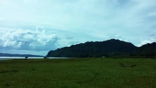 zelené trávy a mountain view