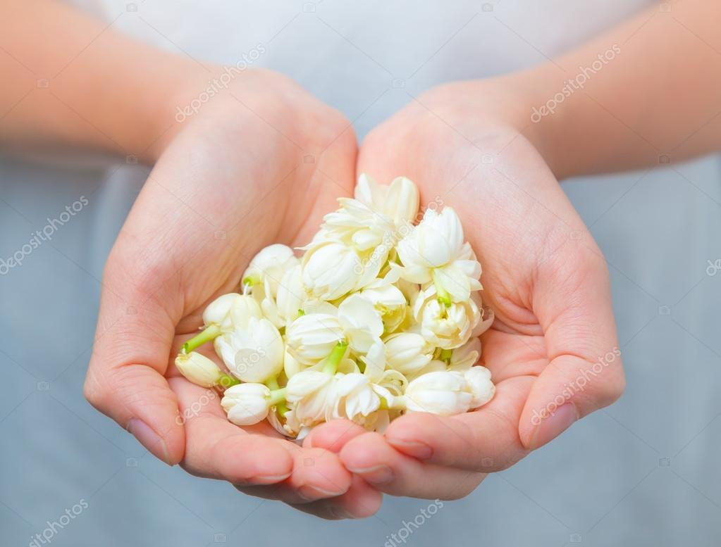 Asian woman hands holding white jasmine flowers stock photo asian woman hands holding white jasmine flowers stock photo izmirmasajfo