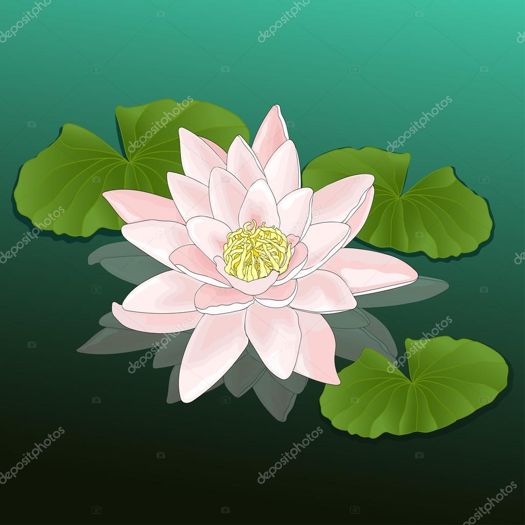 Lotus growing in a pond, lake, river, colorful drawing, natural background, card
