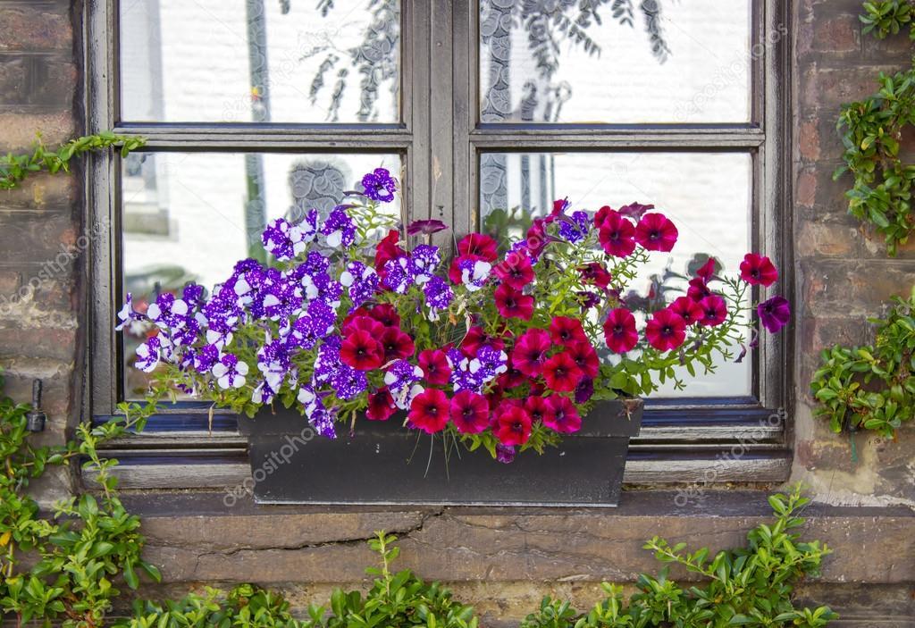 pared de ladrillo con ventanas y jardineras con plantas con flores