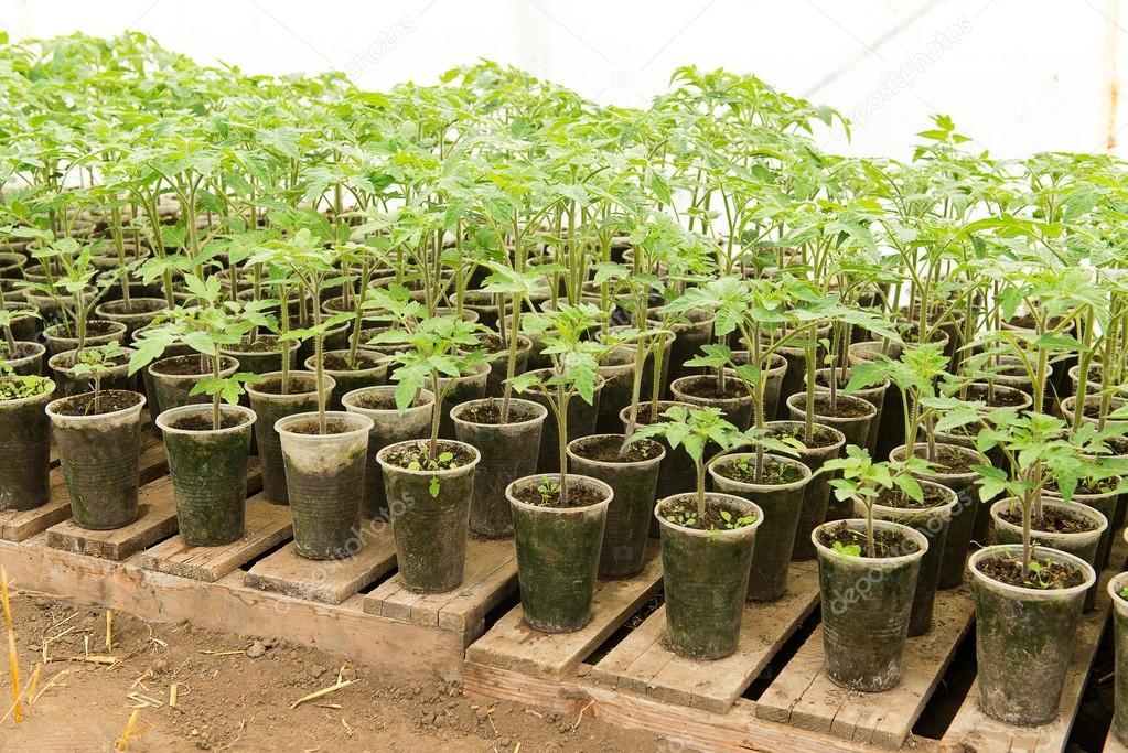 planter un semis
