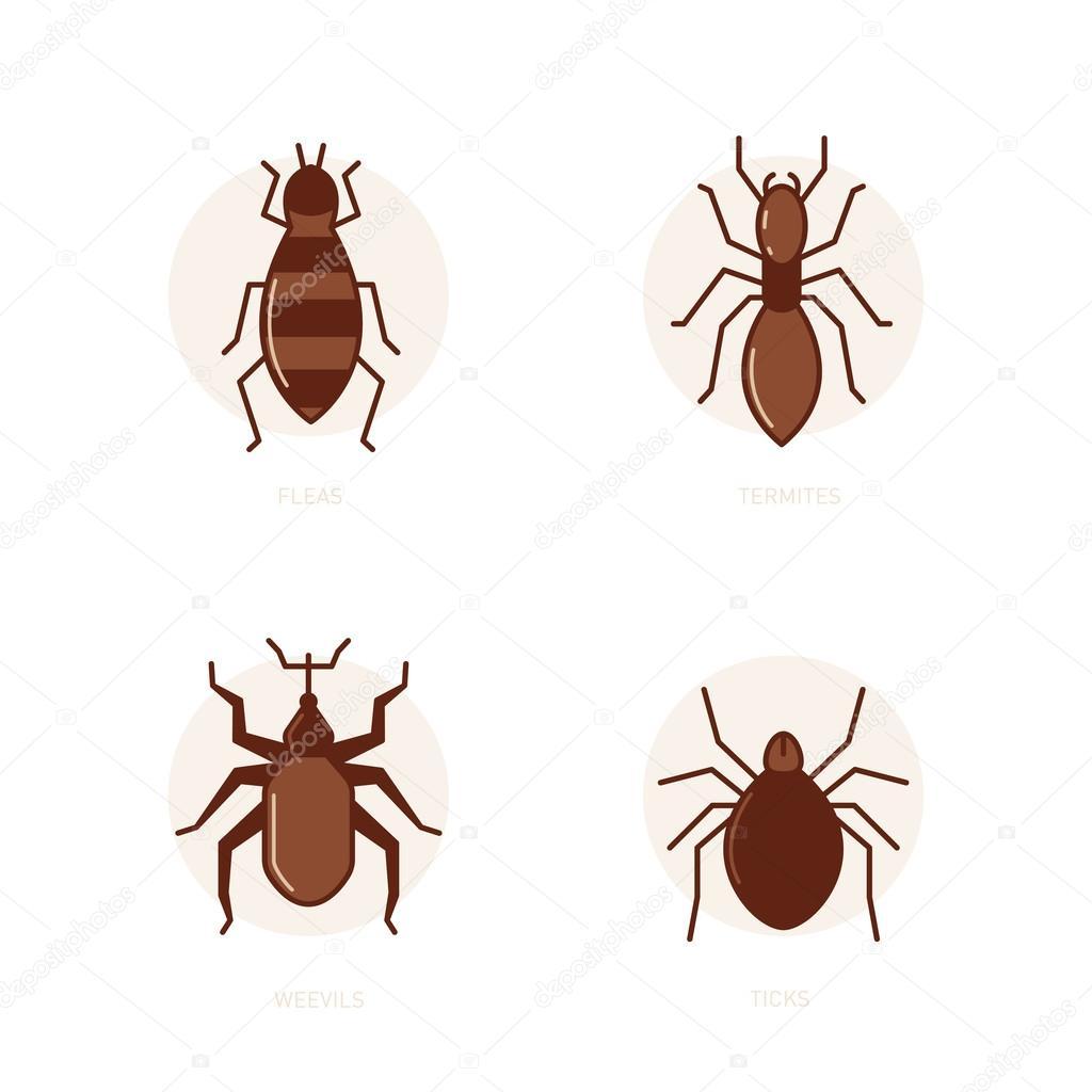 Fleas, termites, weevils, ticks