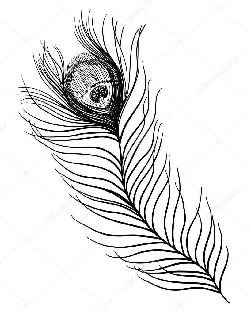 plume de paon illustration de noir et blanc tatouage. Black Bedroom Furniture Sets. Home Design Ideas