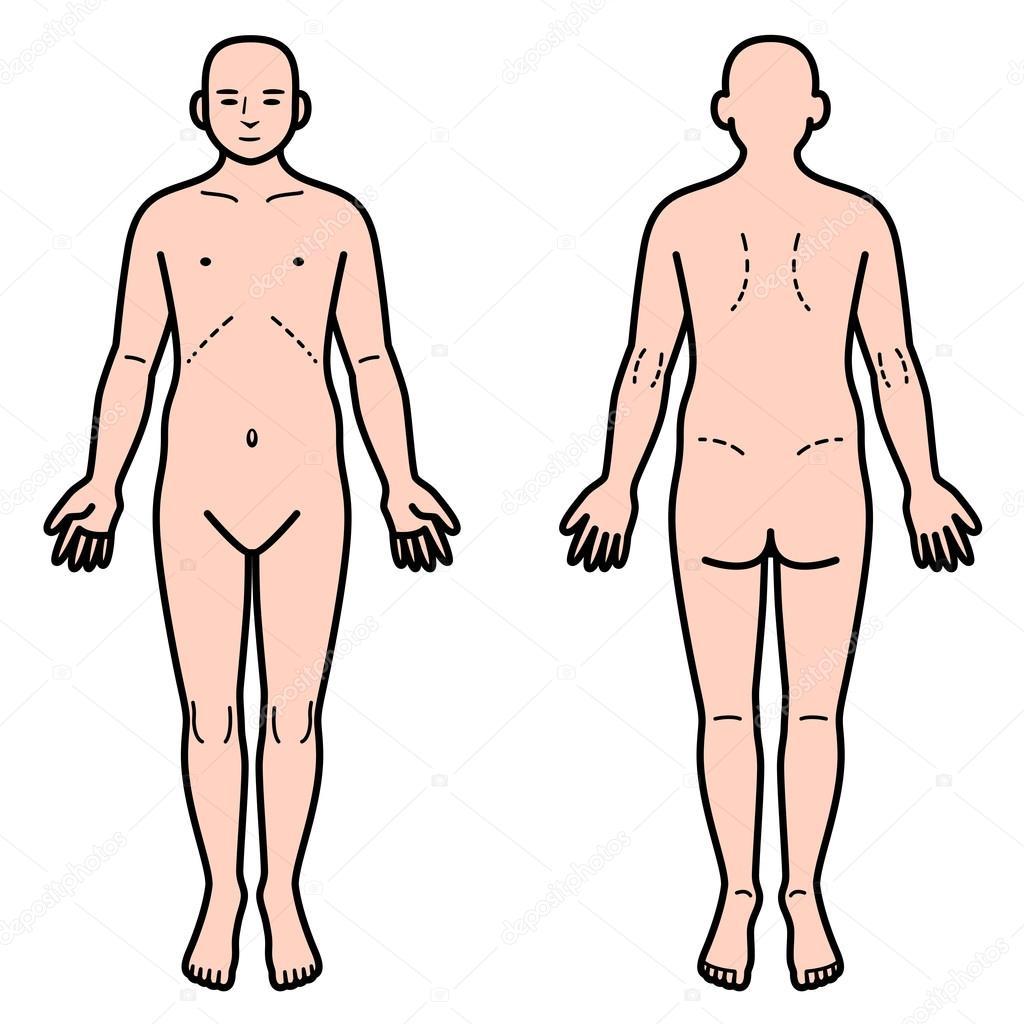 Parte trasera y delantera del cuerpo humano — Vector de stock ...