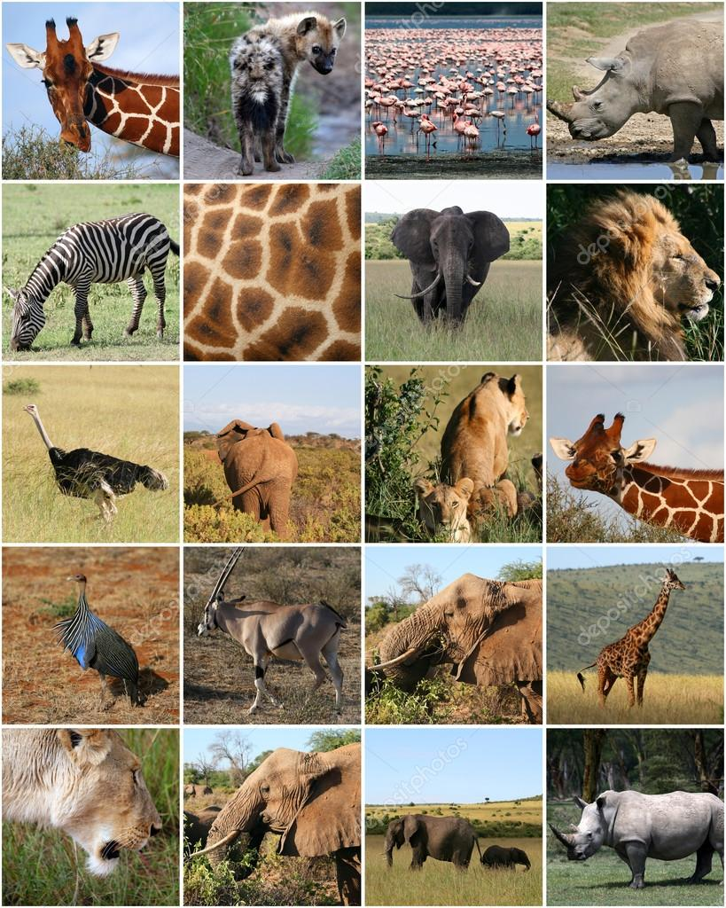 Collage Of Wild Animals In Africa Photo By Agafapaperiapuntahotmailes