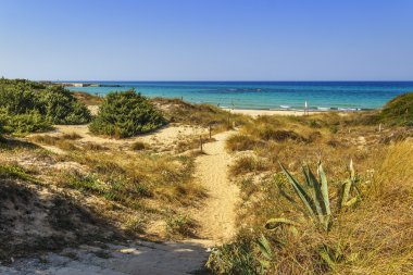 Summer landscape: a nature reserve of Torre Guaceto.BRINDISI (Apulia)-ITALY-