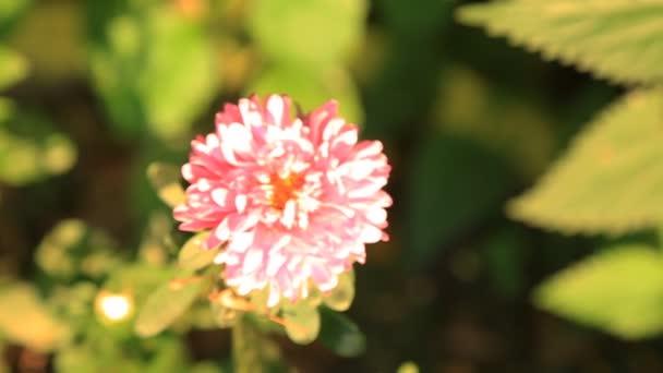 krásná růžová květina v zahradě