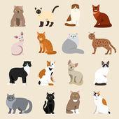 Photo Cat breeds cute pet animal set
