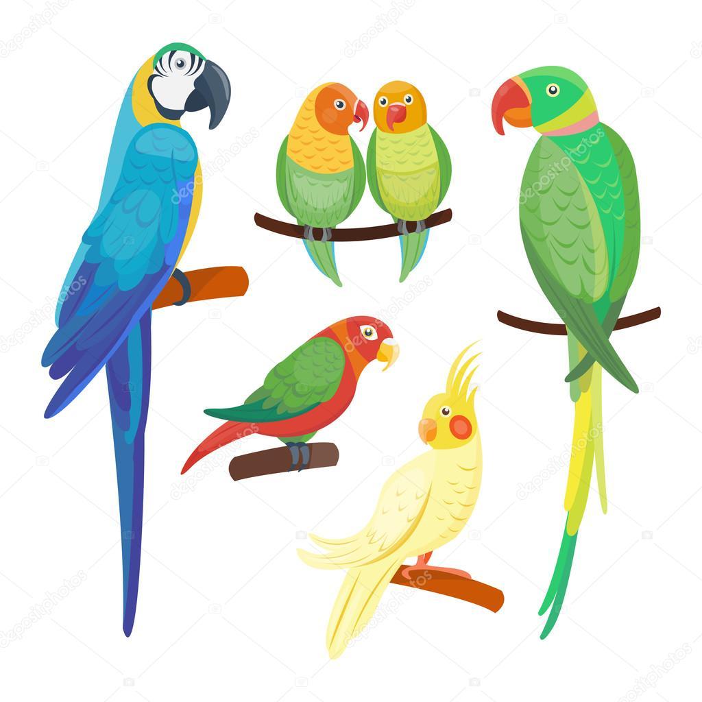 Cartone animato pappagalli set vettoriale — vettoriali