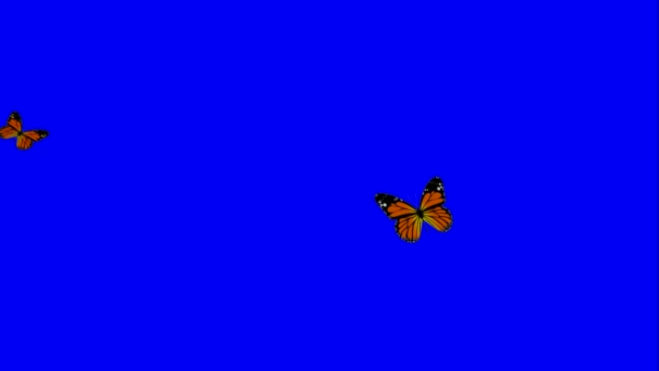 animated two butterfly on green blue screen chroma key useful for garden flower and footage video for showing morning enthusiasm natural lively atmosphere