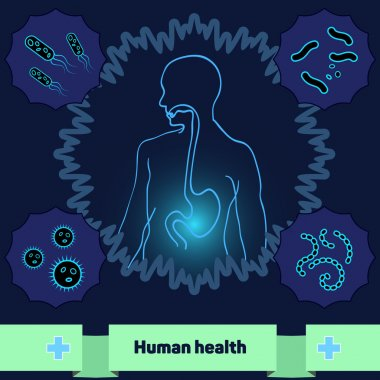 Protection of body against harmful bacteria and microorganisms, a healthy human stomach.