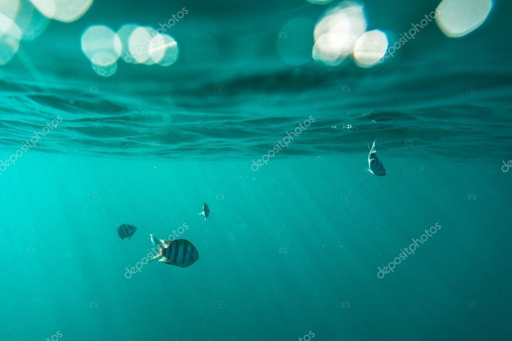 Breathtaking underwater view,Thailand