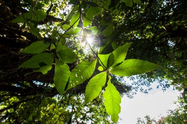 Rainforest Intanon National Park