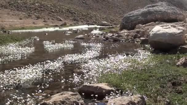 Vrchovištní potok v květu 2