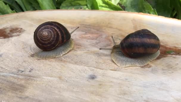two snail crawling on a tree stump