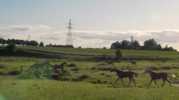 Stádo mladých koní běží volně na louce tráva