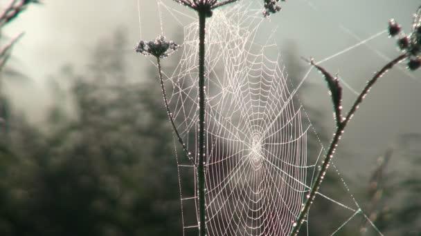 Webové Meadow Dew kapky brzy ráno