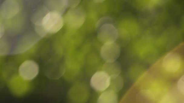 Abstraktní teplé odstíny zelené bílé žluté Bokeh