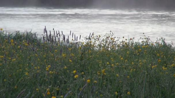Žluté květy na břehu řeky rozmazané pozadí vodní mlha ráno, pomalý průtok
