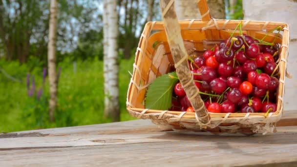 Juicy red cherries are falling from the basket on the wooden table