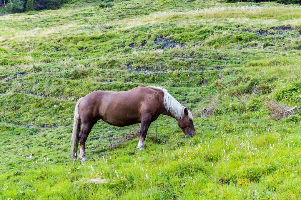 Horse in Alps Austria