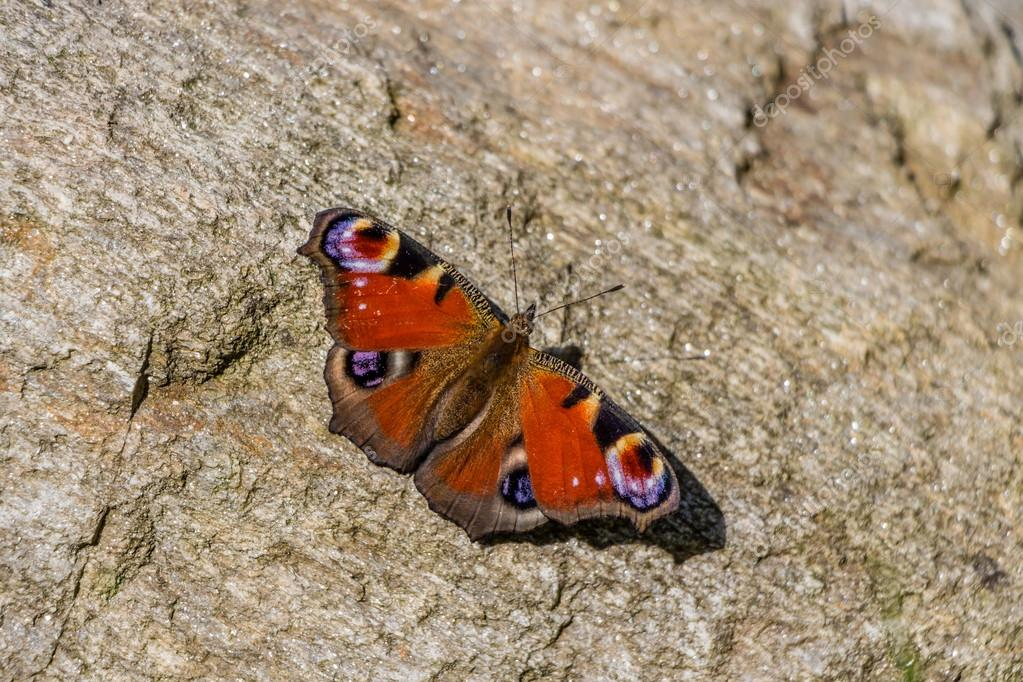 Beautifull butterfly on rock/stone