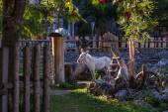 Vesnice s krásné domy, Rakousko, Filzmoos