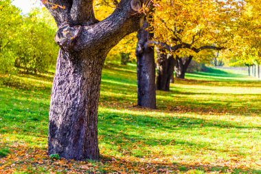 Autumn trees in the Vysehrad Gardens in Prague