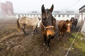 koně na farmě