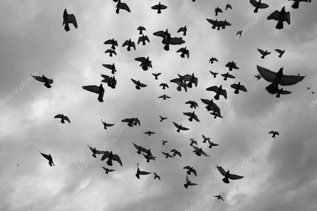 Doves flying in the grey sky