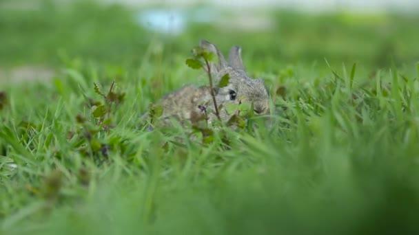 Coniglio che si siede nellerba verde
