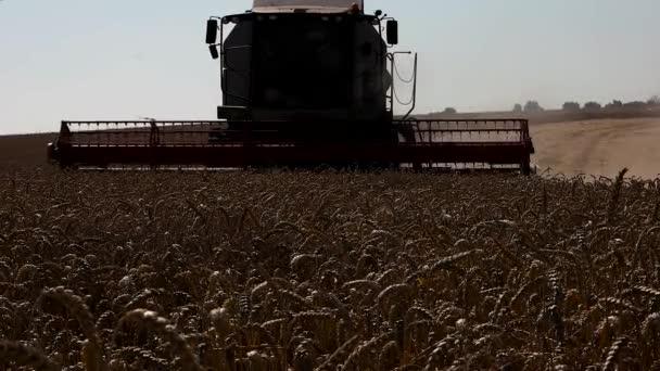Kombajn Mlátící pšeničné pole zobrazení