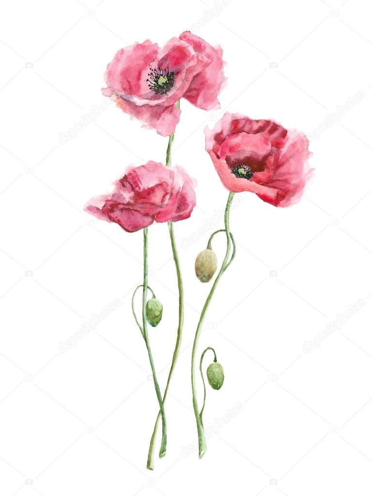 Fiori Watercolor.Watercolor Pink Flowers Stock Photo C Katekr 96316408