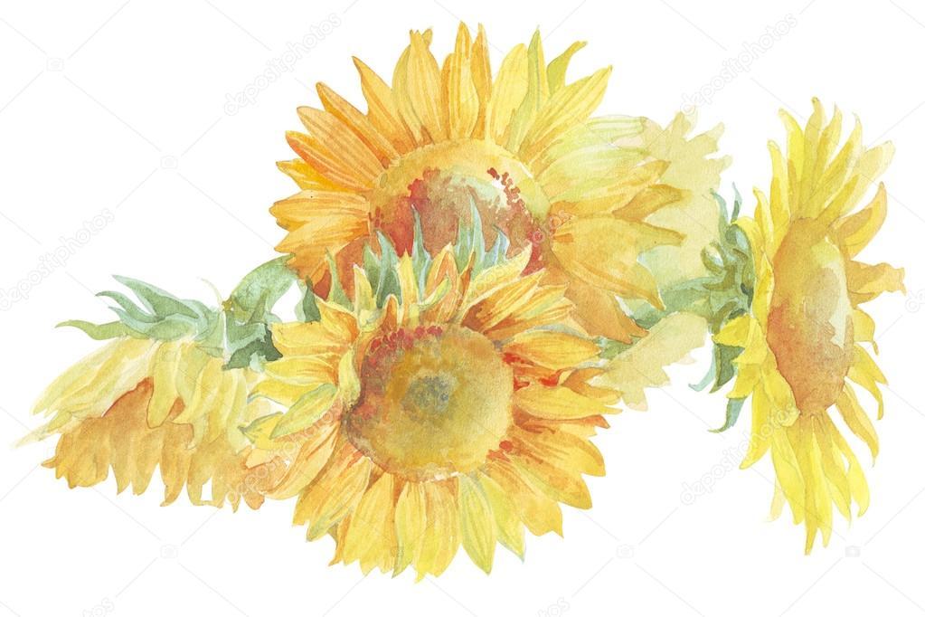 Flower sunflower watercolor