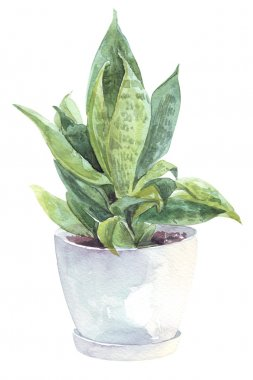 watercolor home flower