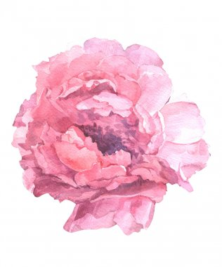floral illustration of a watercolor