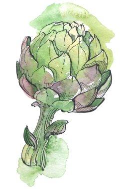 artichoke watercolor illustration
