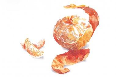 mandarin citrus fruit watercolor