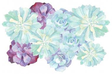 watercolor flowers succulents