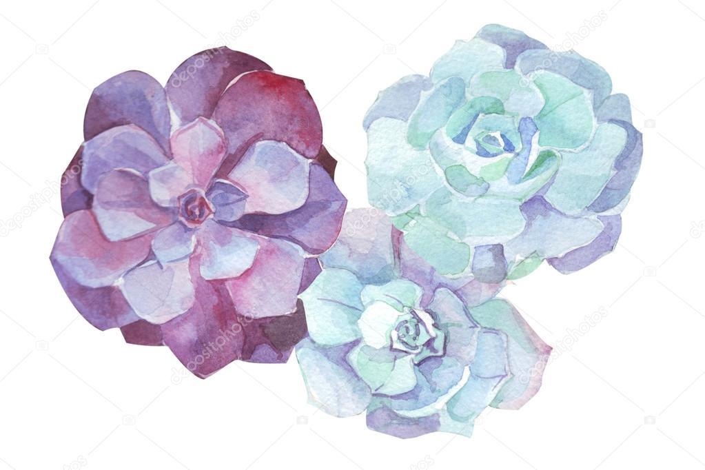 Succulents Paintings Images