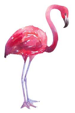 watercolor illustration of a flamingo