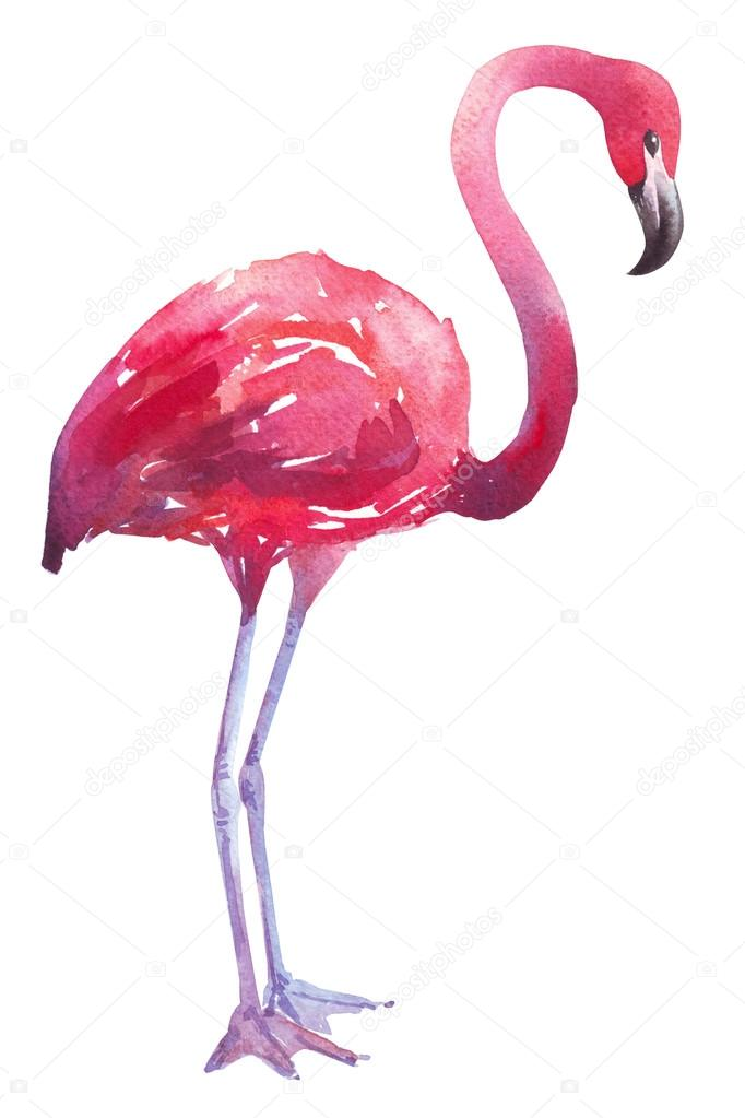 watercolor illustration of a flamingo